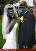 Monkey wedding